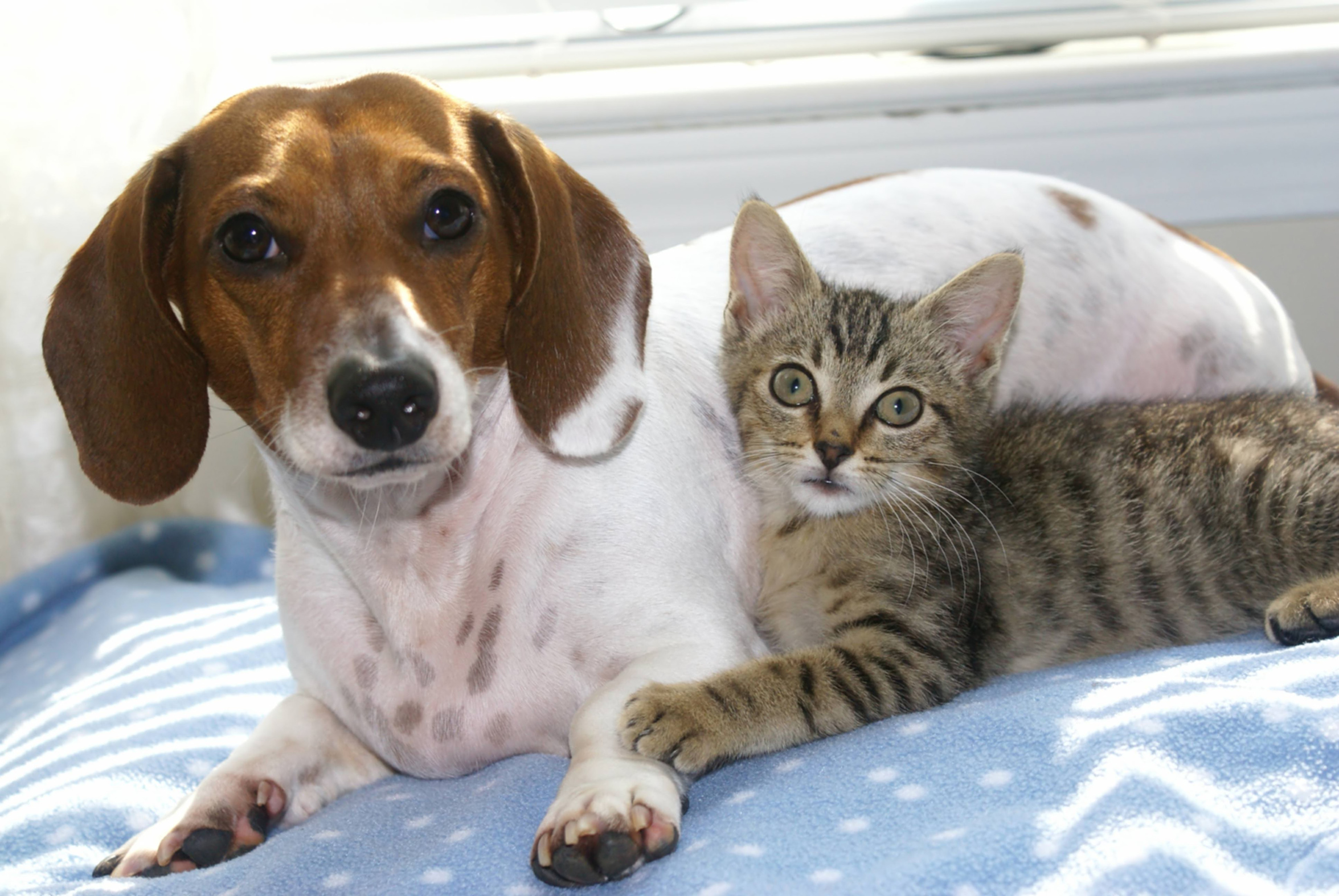 Pet Friendly Hotels 187 Small Animal Hospital 187 College Of