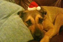 dog-with-xmas-hat-on-450
